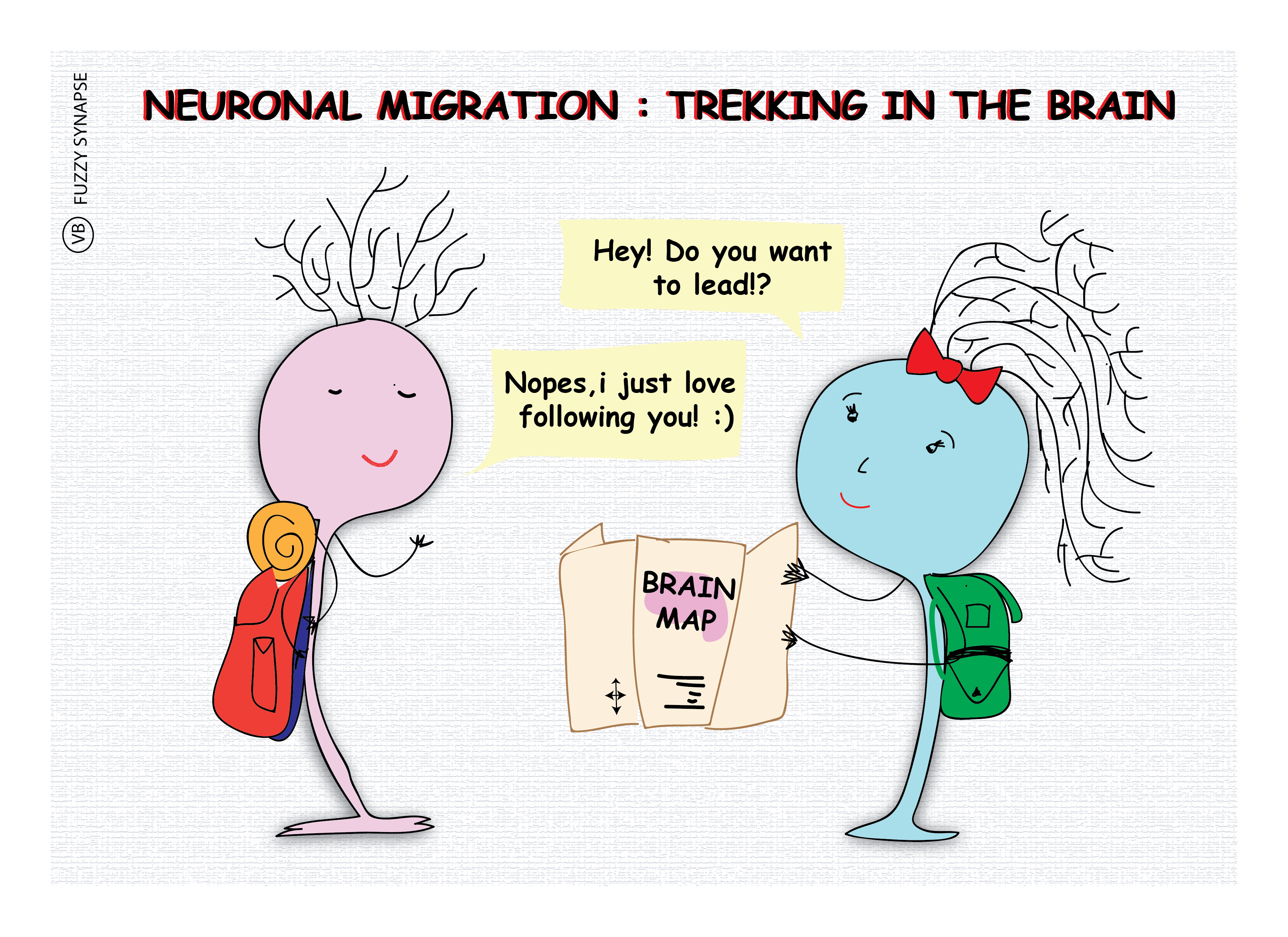 Neuronal migration, neurons, neuroscience, neurobiology